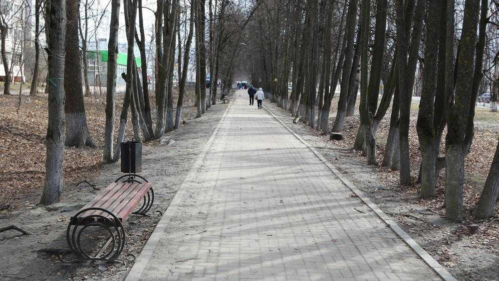 В Брянске Липовая аллея вошла в список для голосования за благоустройство
