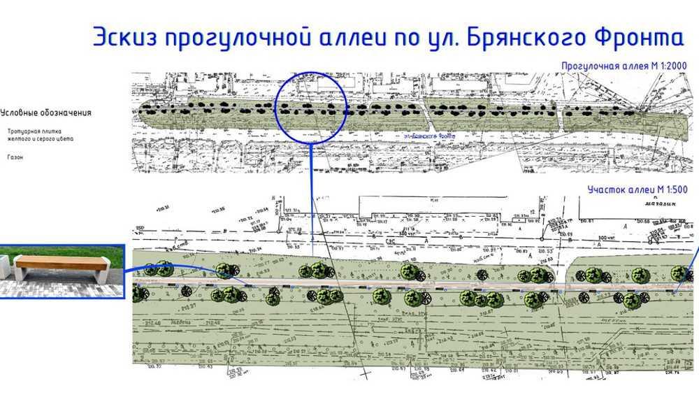 Липовая аллея в Брянске стала «кандидатом» на реконструкцию