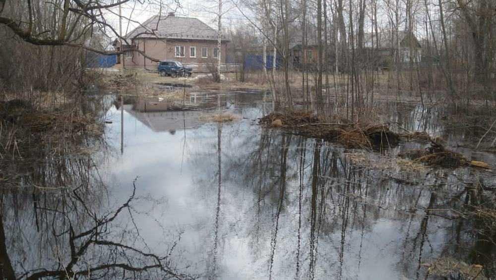 В Брянске перестал подниматься уровень воды в Десне и Болве