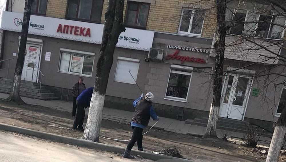 В Брянске начали побелку деревьев