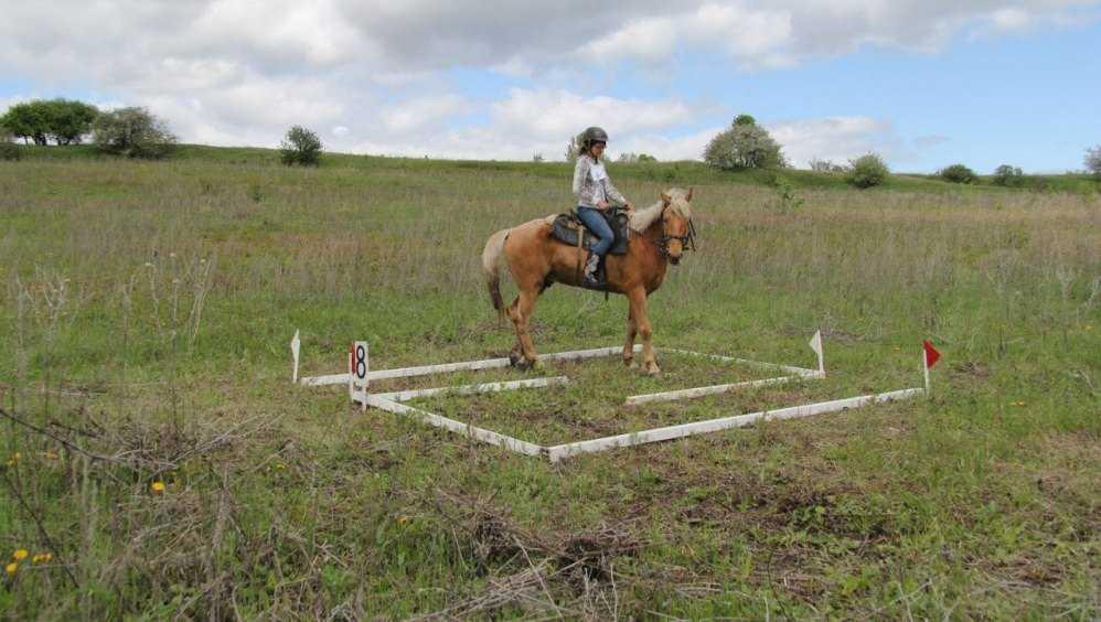 В Брянской области впервые пройдёт турнир по конному туризму