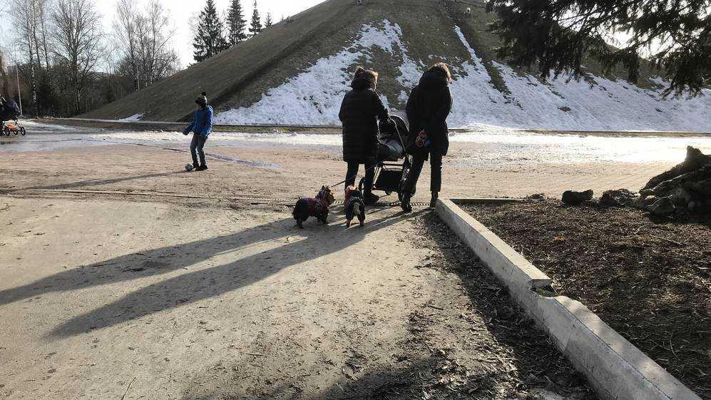 В Брянске парк «Соловьи» весной окончательно оккупировали собачники