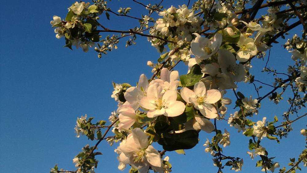 В Брасовском районе Брянской области на 90 гектарах посадили яблоневый сад