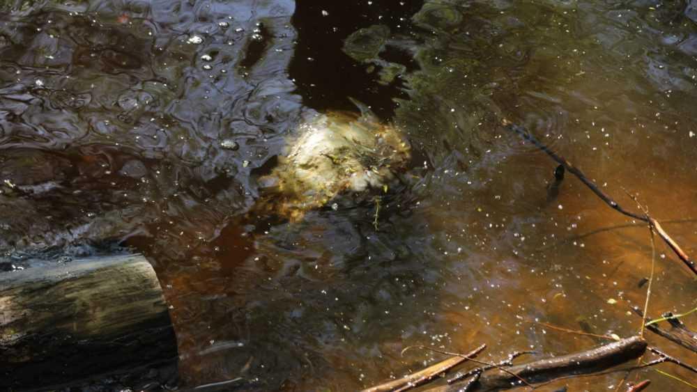 Жители Брянска сообщили о загрязнении Десны в районе Московского микрорайона