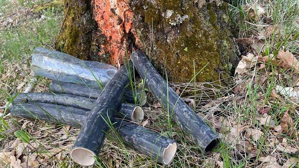 Под Брянском в лесу сборщики березового сока изуродовали деревья