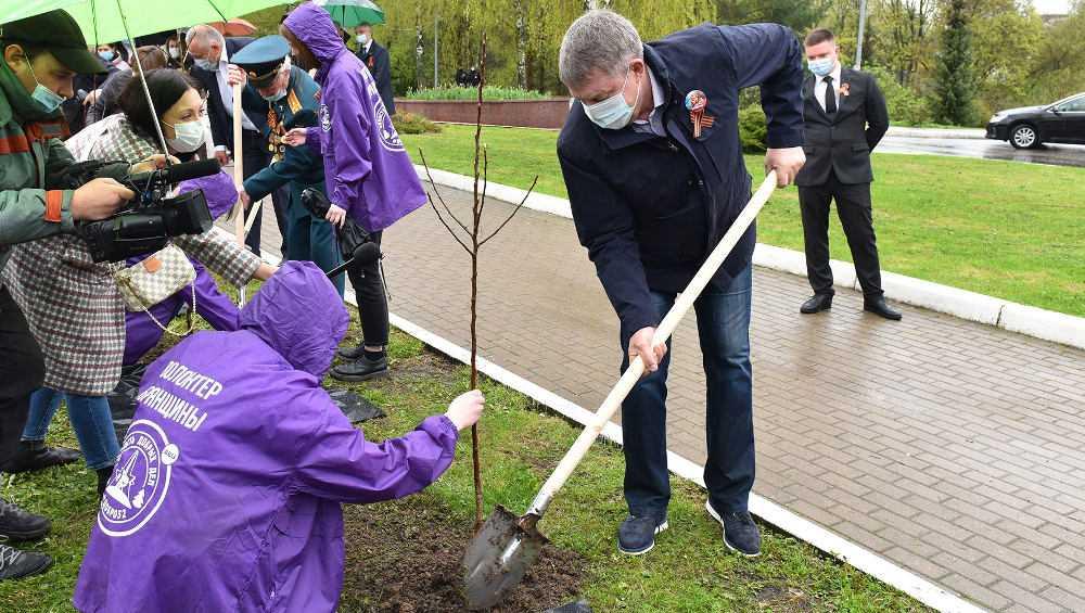 Брянский губернатор Богомаз посадил яблоню на аллее у «Круговой обороны»