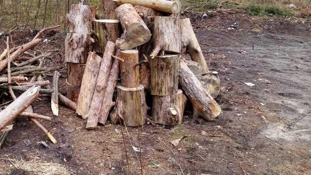 Брянские коммунальщики убрали упавшее на кладбище дерево