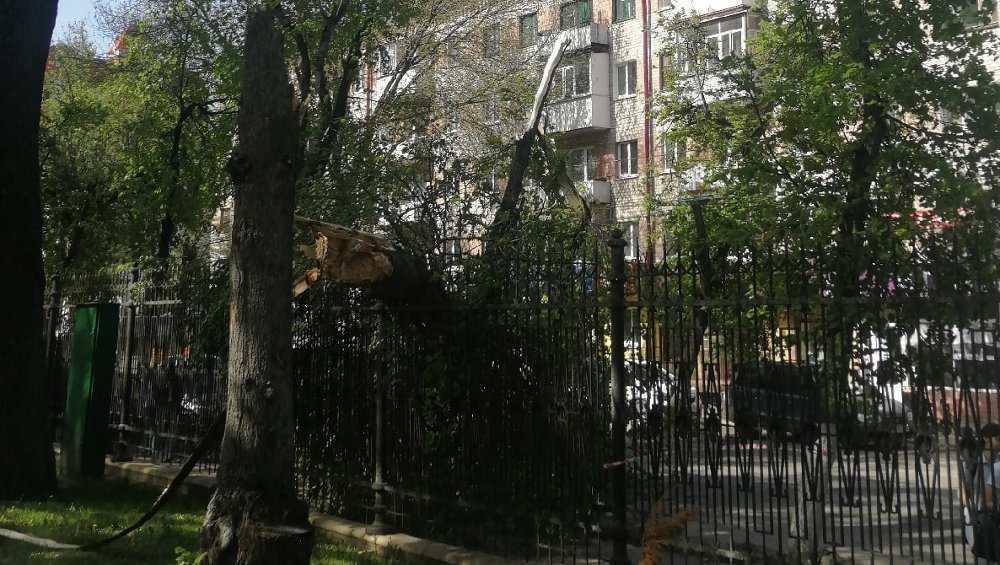 В Брянске дерево из парка Толстого рухнуло на припаркованный автомобиль