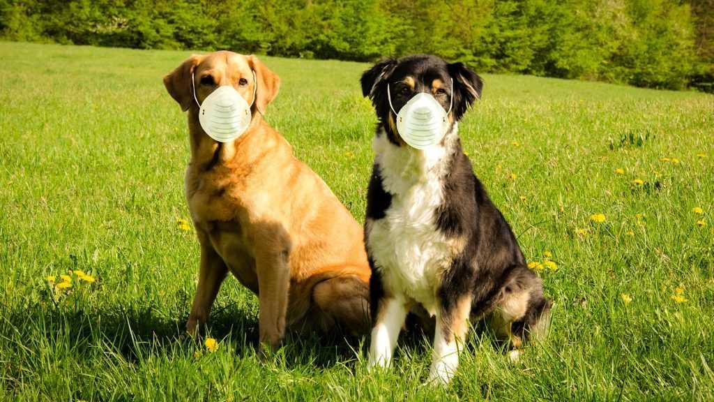 Брянцам стала доступна вакцинация животных от коронавируса