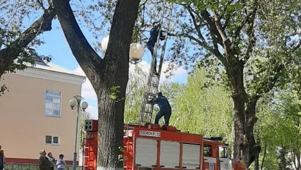 В Дятькове сотрудники МЧС провели операцию по спасению голубя