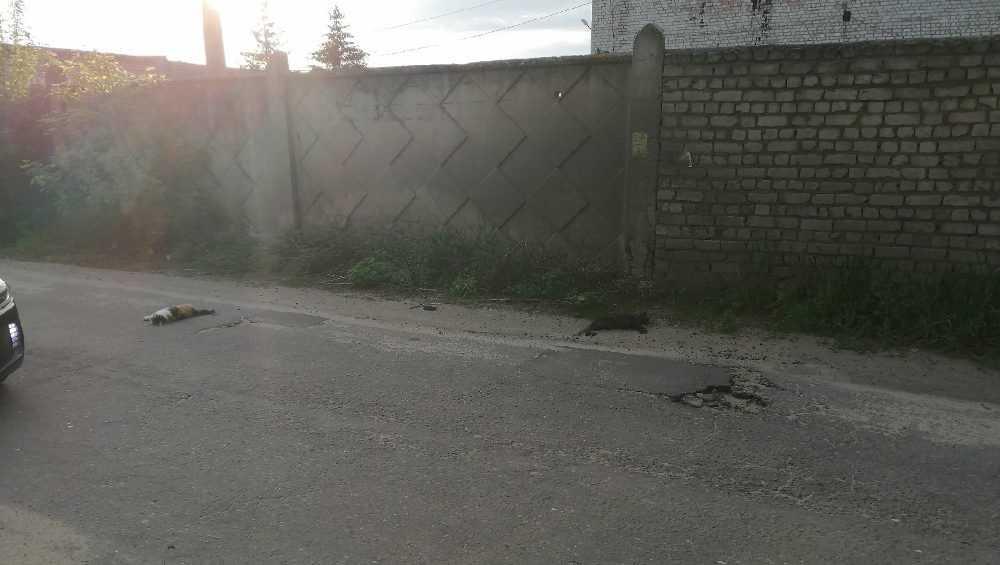 В Брянске заявили о массовом убийстве кошек