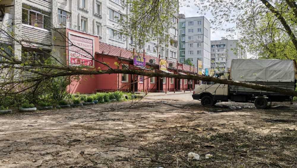 В Брянске на улице Брянского Фронта во дворе дома рухнуло дерево