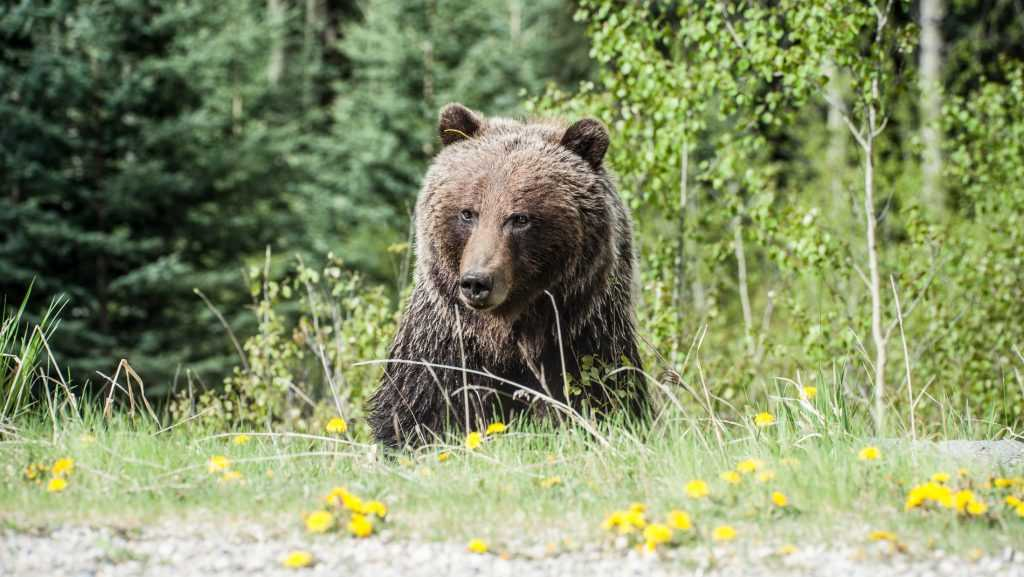 В парке убили медведя, растерзавшего 42-летнего туриста из Москвы