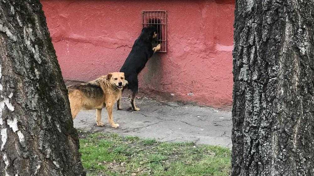 В Брянске снова предупредили о таинственных ловцах собак
