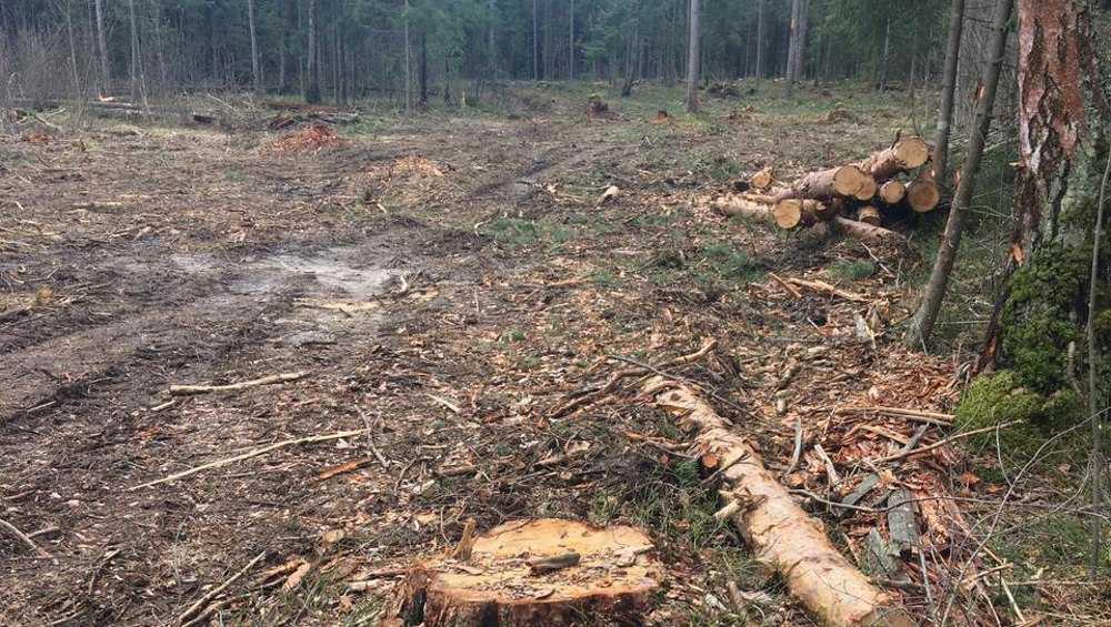 В Брянском районе опровергли сообщение о варварской вырубке леса