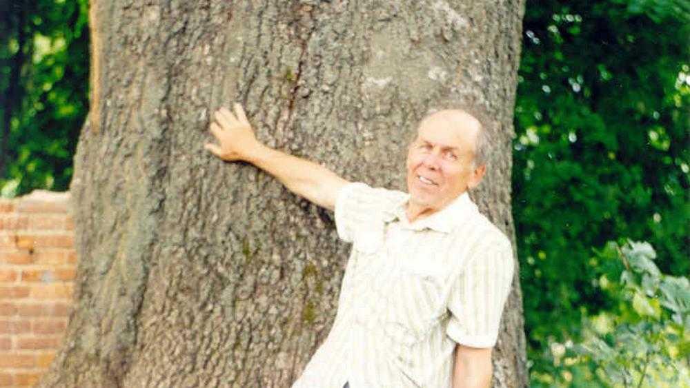 Брянский 300-летний ясень стал претендентом на звание дерева года России