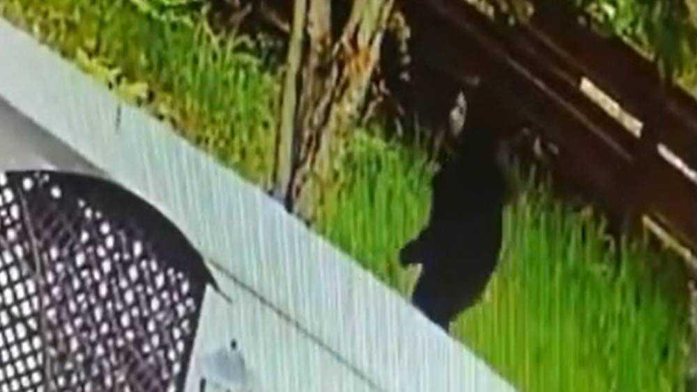 Под Брянском в Фокино сняли видео о похожем на маньяка мужчине