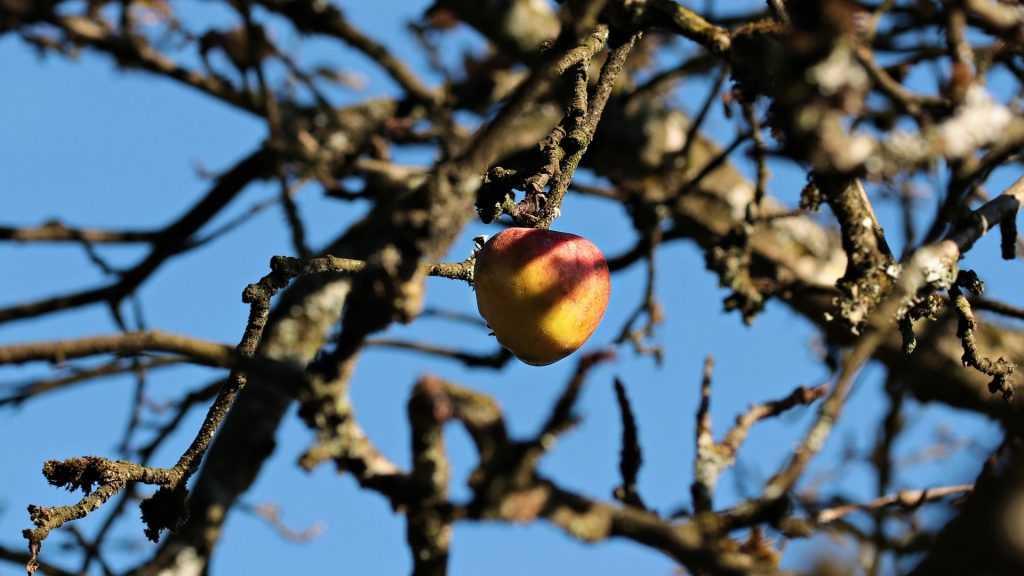 В Брянской области начали массово гибнуть от жука короеда молодые яблони