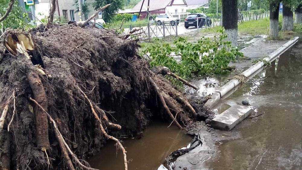 В Брянской области 29 июня пройдут грозы с градом и ураганным ветром