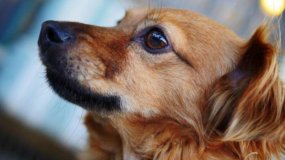 В Брянске сняли видео забавы мальчика, раскрутившего на поводке собаку