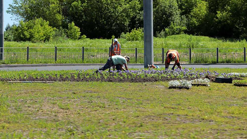 В Брянске вместо увядших тюльпанов высадят более 400 тысяч новых цветов