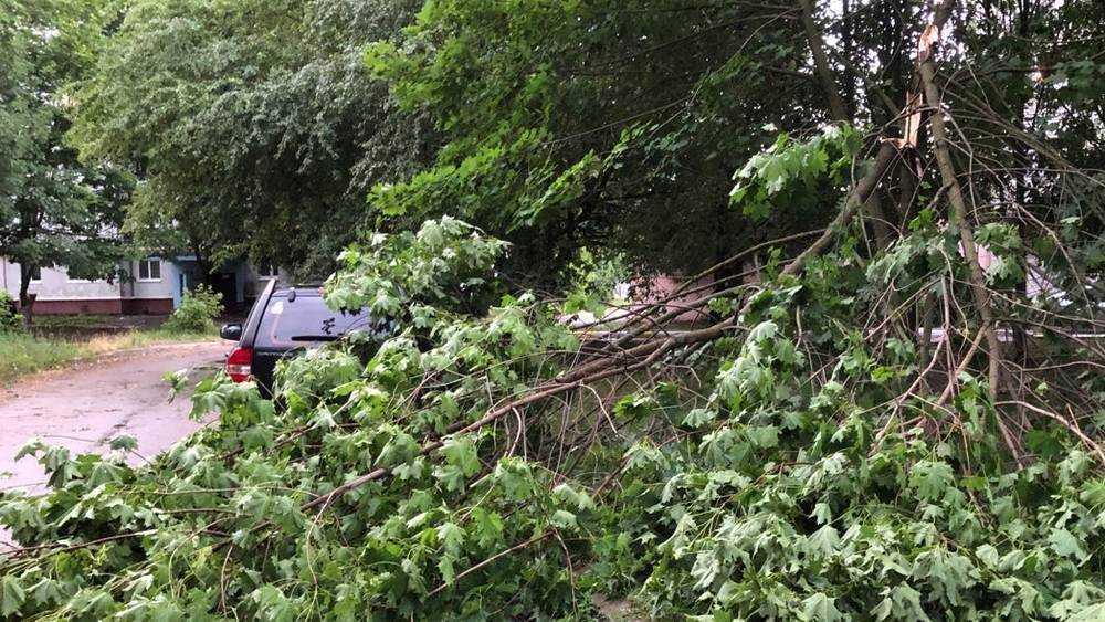 В Брянске во время урагана упавшие деревья раздавили 8 автомобилей