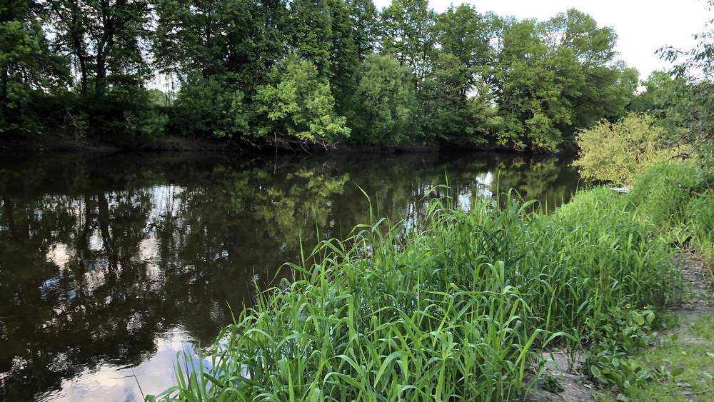 В Брянске 24 июня начнут основной этап расчистки 5,7 километра русла реки Десны