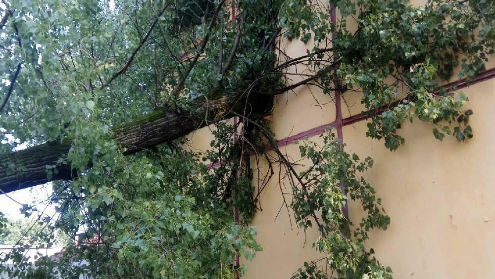 В Брянске рухнувшее дерево повредило стену многоэтажного дома