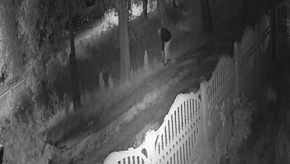 В Дятькове сняли видео ночной кражи двух туй с приусадебного участка