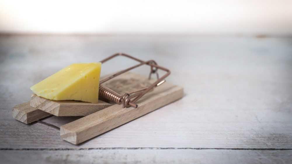 Опасный брянский сыр привезли в магазины Тверской области
