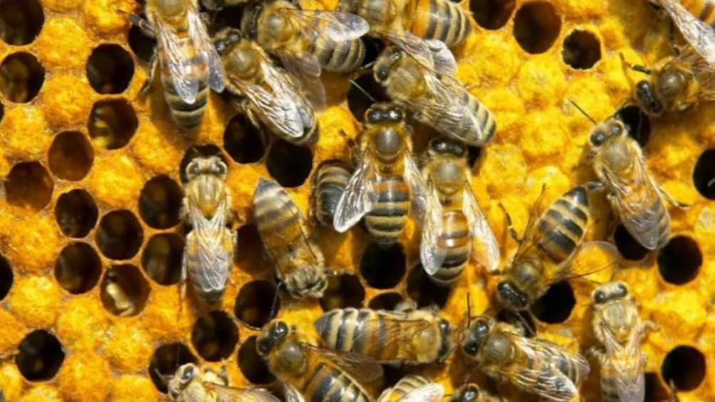 Брянские пасечники пожаловались прокурору на гибель отравленных пчёл