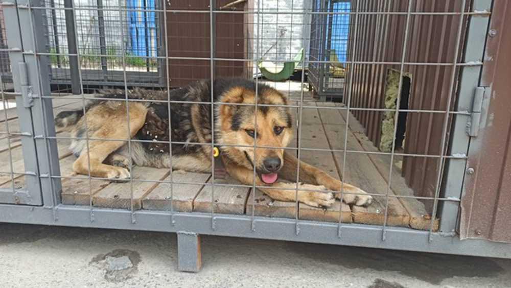 Брянскому приюту для животных пообещали официальный статус