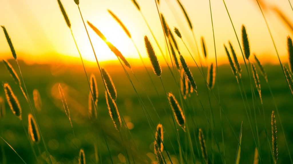 Брянскую область в последний день июля накроет 32-градусная жара
