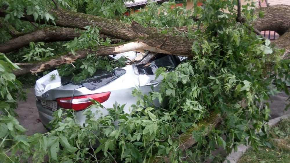 В Брянске рухнувшее дерево раздавило автомобиль