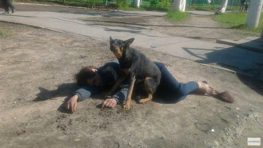 Пьяные брянцы не смогут выгуливать собак