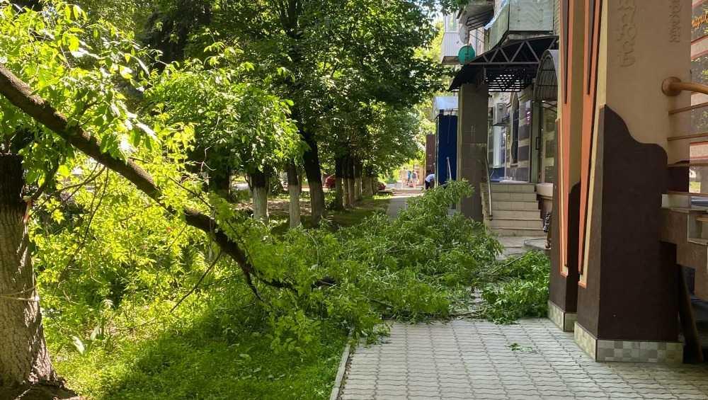 В Брянске огромная ветка упала на тротуар перед салоном красоты
