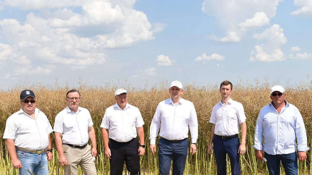 В Брянской области урожайность рапса превысила европейскую