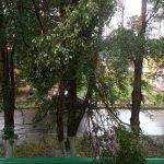 В Брянске рухнувшее дерево едва не покалечило мужчину  с ребёнком