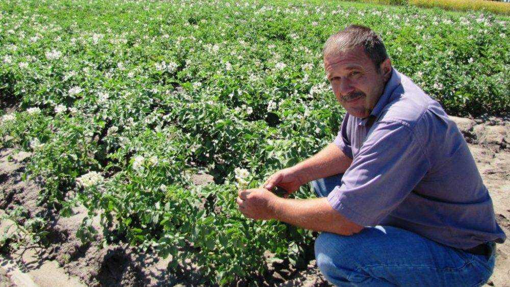 Ректор аграрного университета проверил подготовку к Дню брянского поля