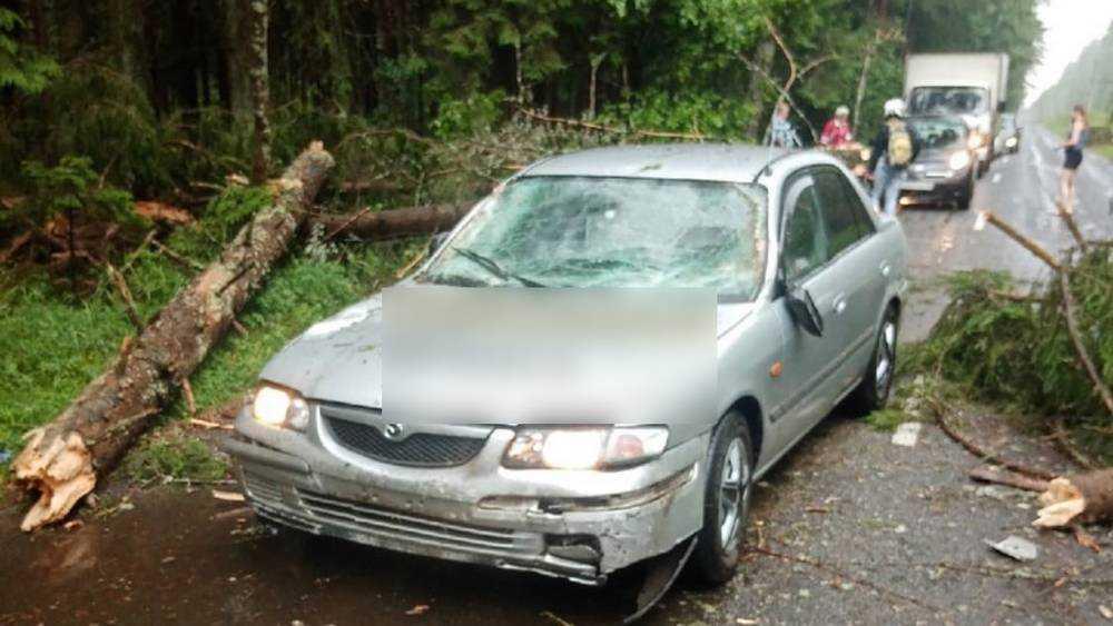 В брянском лесу на двигавшийся автомобиль во время дождя упало дерево