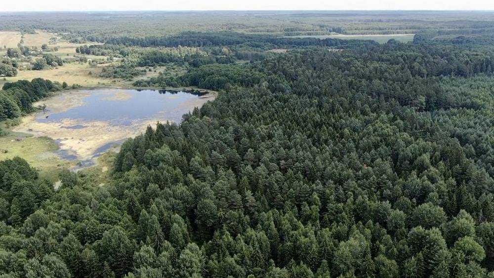 В Брянской области стало больше лесов