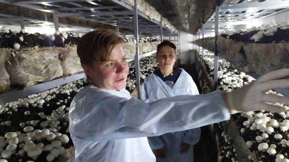 В Погаре Брянской области начала работу фабрика по производству грибов