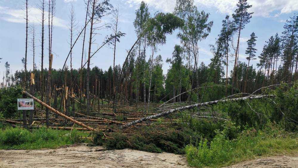 В брянском поселке Пятилетка буря сломала множество деревьев