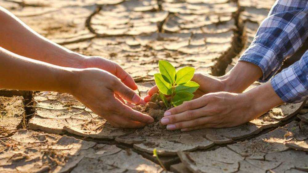 Брянской области предсказали сильнейшую за десять лет засуху в июле