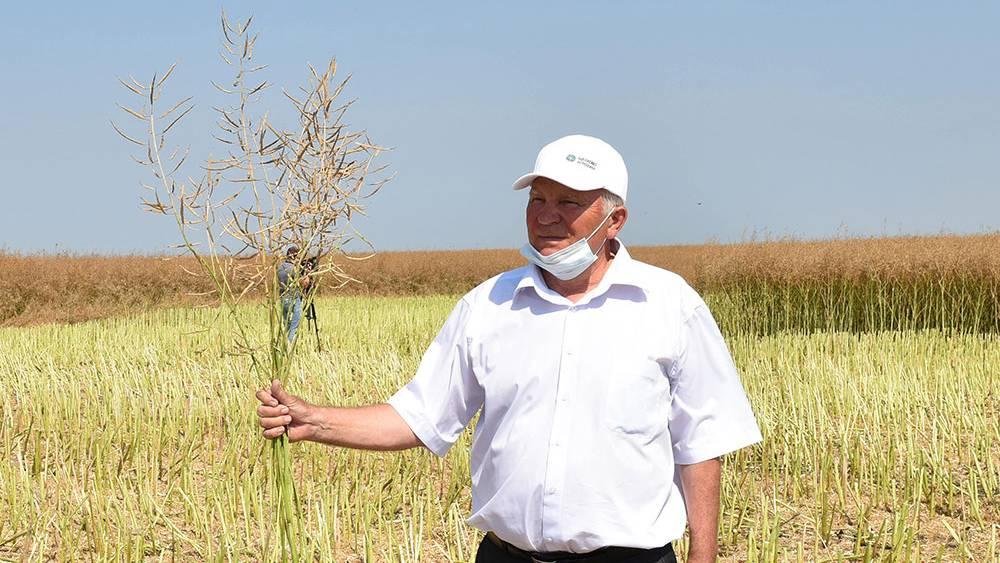 Брянская область стала первой в России по объему урожая озимого рапса