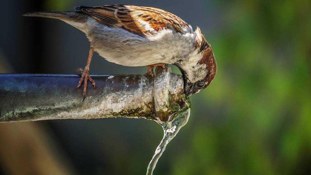 Жители Суземки измучились без воды − власти пообещали к вечеру всех напоить