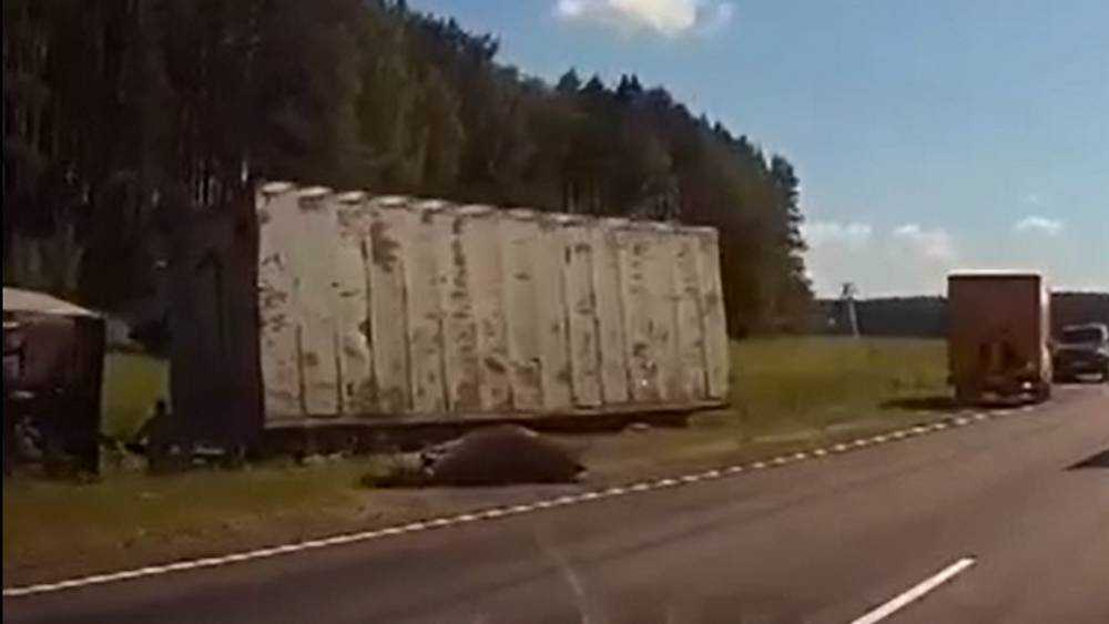 В Брянской области грузовик сбил насмерть лося и перевернулся