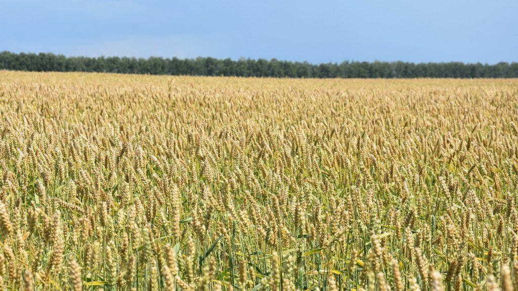 Новая аграрная политика должна обеспечить сельским жителям достойную жизнь