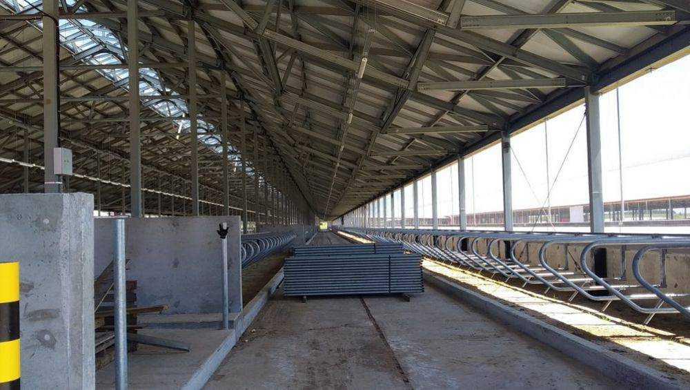 На новую ферму в Брасовском районе привезут первых 600 коров из Германии