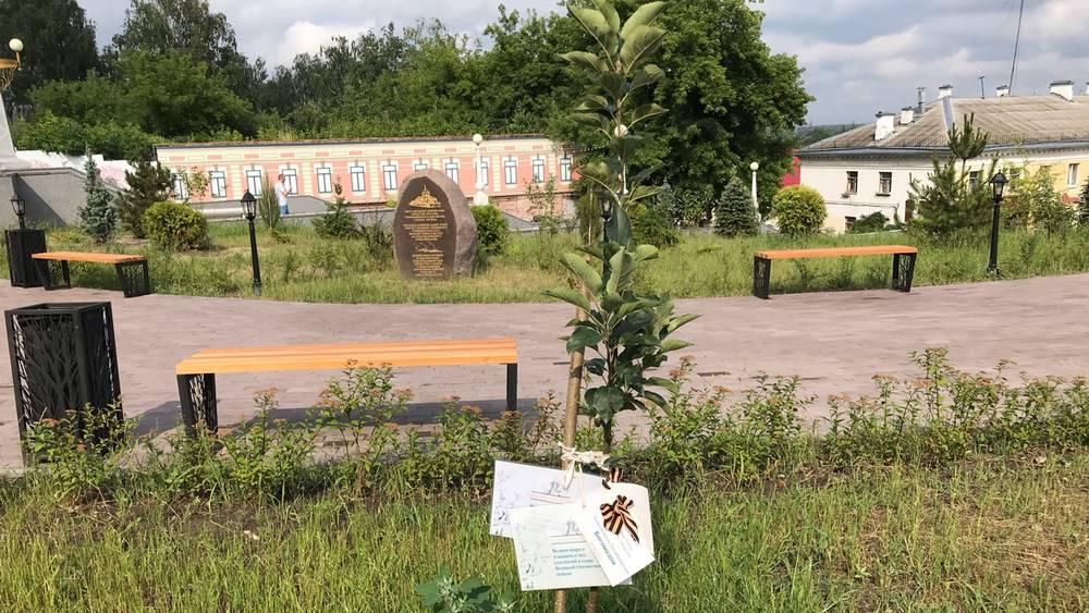 Дерево брянского губернатора Богомаза хорошо прижилось в Саду Победы